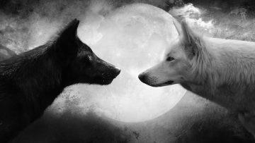 Archivos del Terror – Hombres lobo