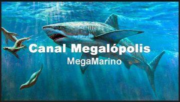 Australia – El gran tiburón blanco (NatGeo)