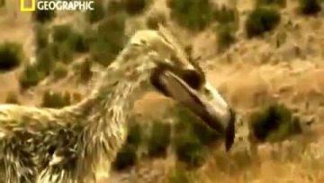 El ave del terror