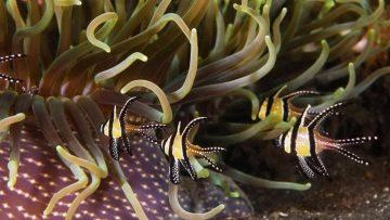 El Caribe Salvaje. Los ritmos de la Vida – Corales y quetzales