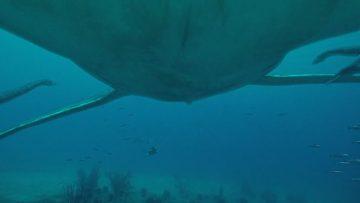 Gigantes del océano – Una aventura prehistórica