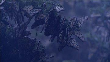 Las alas del sol: bosques templados